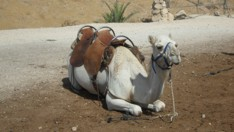 Lets ride the camel