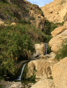 En Gedi Nature Reserve and National Park